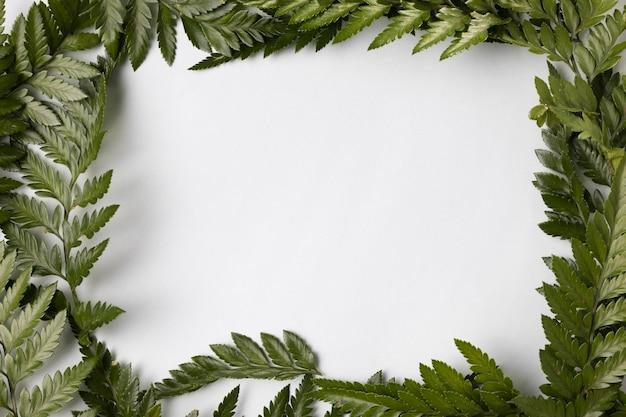 Variedade de vista superior de folhas verdes, com espaço de cópia