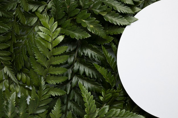 Variedade de vista superior de folhas verdes com moldura