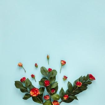 Variedade de vista superior de rosas e folhas de jardim