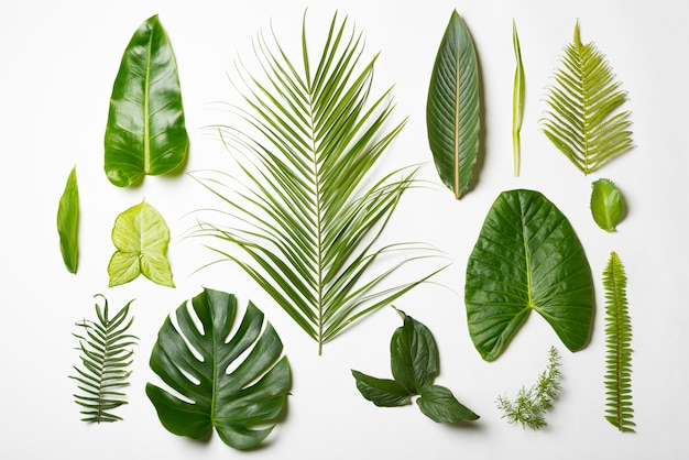 Variedade de vista superior do conceito de folhas naturais