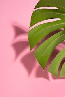 Variedade mínima de folhas tropicais