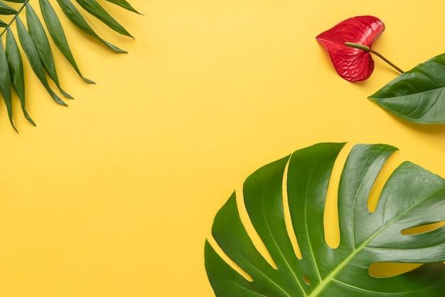 Variedade mínima de plantas tropicais Foto gratuita