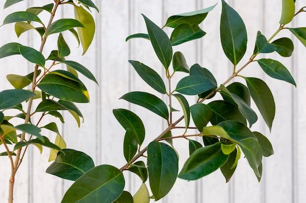 Variedade minimalista de plantas naturais em um fundo monocromático