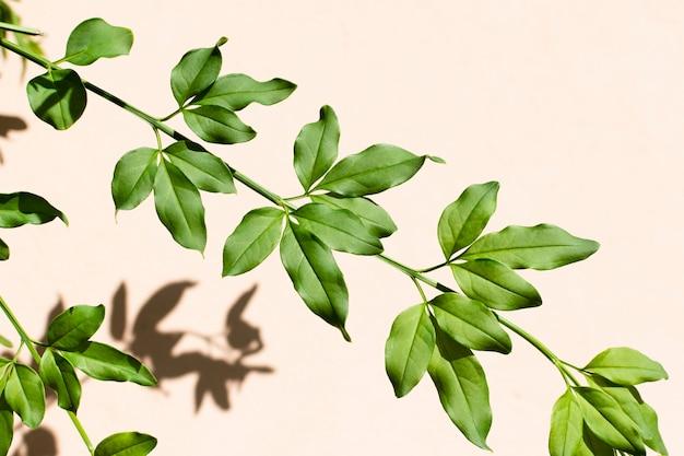Variedade minimalista de plantas naturais