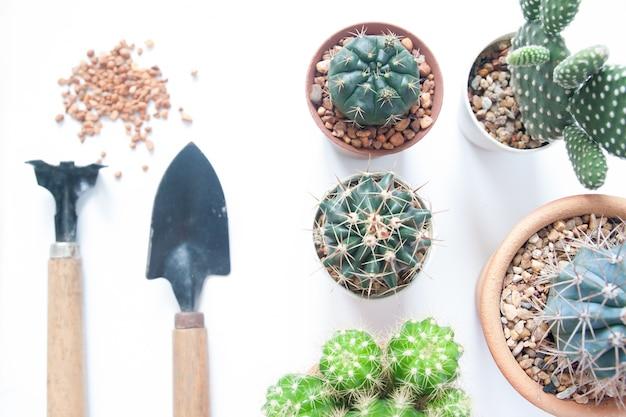 Vários cactos com ferramentas de jardim no fundo branco