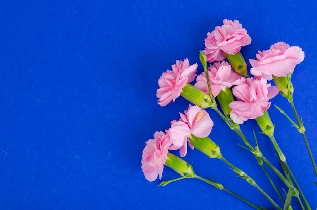 Vários cravos rosa frescos. foto