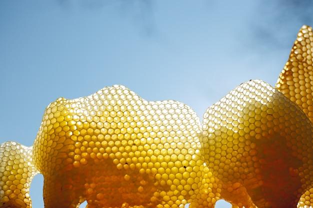 Vários fragmentos de favo de mel na luz do sol para o fundo do céu claro.
