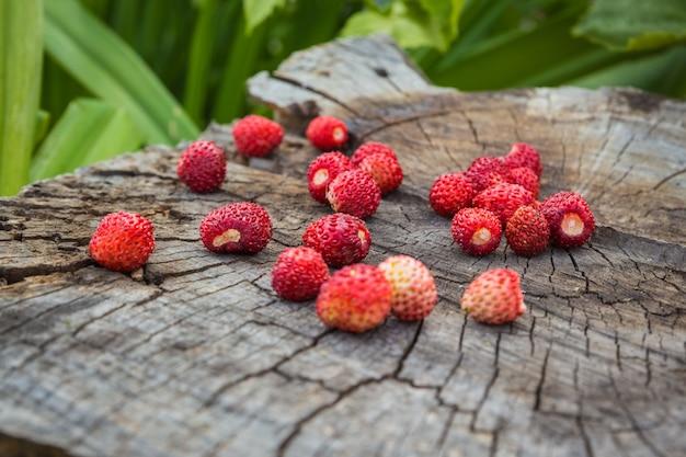 Vários frutos maduros de morangos silvestres em um toco