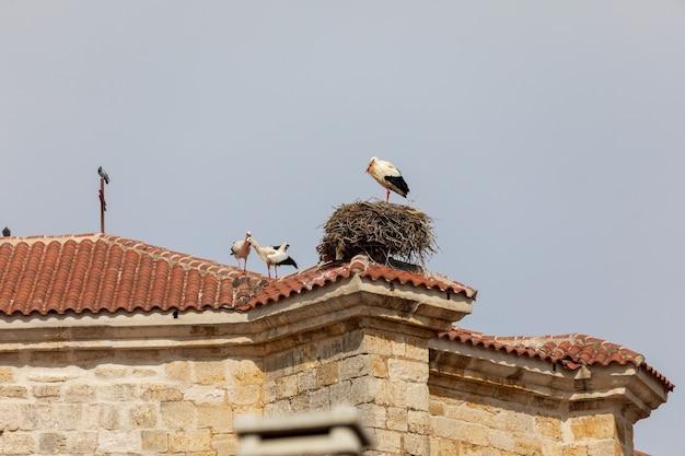 Vários pares de cegonhas e ninhos no telhado de uma igreja.