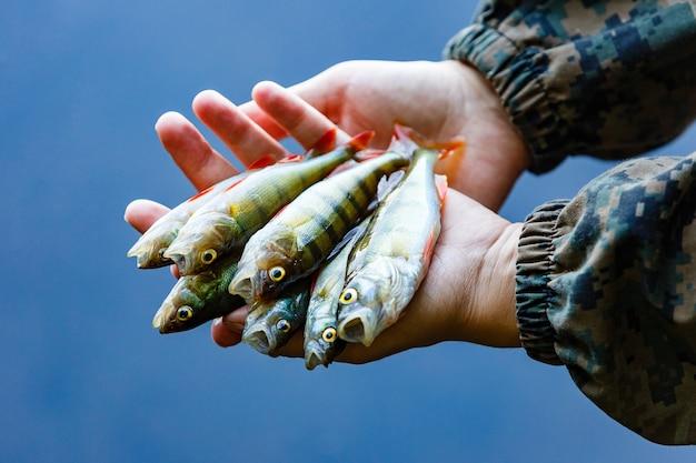 Vários pequenos poleiros são pegos pescando no verão