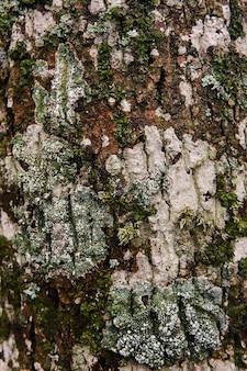 Vários tipos de musgos e líquenes na casca da árvore