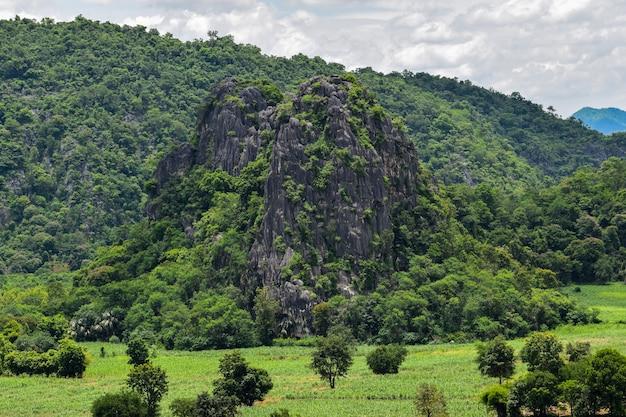 Vários tipos de plantas da floresta nas falésias, montanhas de calcário e florestas, lanscape e natureza, habitat de vida selvagem