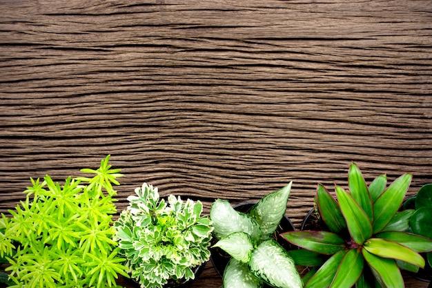 Vários tipos de plantas ornamentais são colocados em tábuas de madeira velhas.