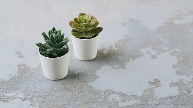 Vários tipos de plantas suculentas echeveria havortia em vasos de barro, decoração de casa moderna escandinava
