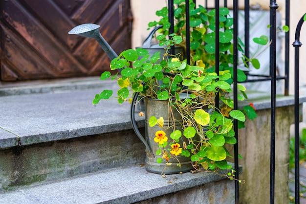 Vaso com flores e regador na escada da casa.