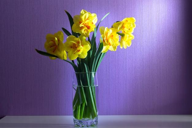 Vaso com narcisos na luz. flores da primavera. em fundo roxo