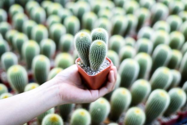 Vaso de cacto verde de close-up, planta de jardim