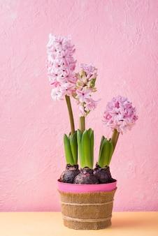 Vaso de flor de alto ângulo de jacinto