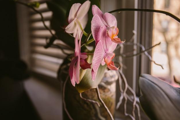 Vaso de flores decorado ao lado de uma janela