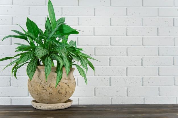 Vaso de flores verde na superfície da madeira contra a parede de tijolos