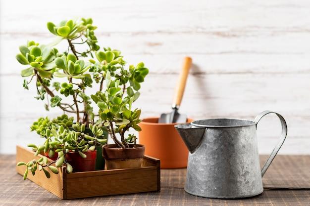Vaso de plantas com regador