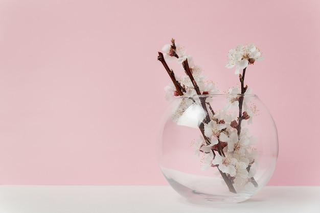 Vaso de vidro com flores brancas de árvore de alperce em fundo rosa.