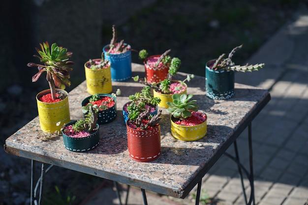 Vasos coloridos decorados à mão com pequenas suculentas em mesa rústica de granito em um jardim ao sol