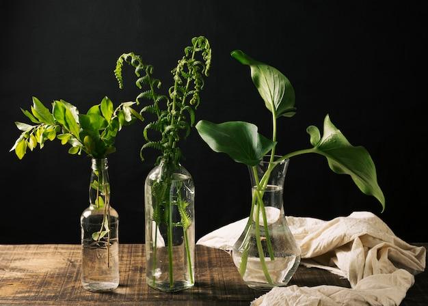 Vasos com plantas verdes