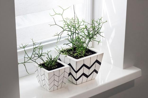 Vasos de flores com padrões geométricos no parapeito da janela