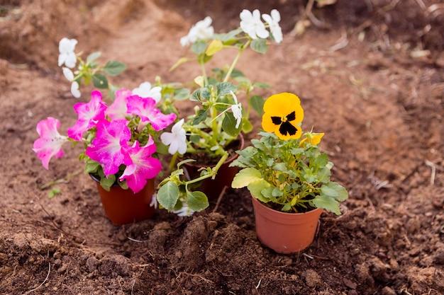 Vasos de flores de alto ângulo no solo