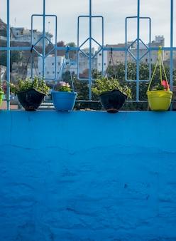 Vasos de flores na parede azul
