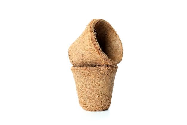 Vasos de plantas de coco isolados no branco
