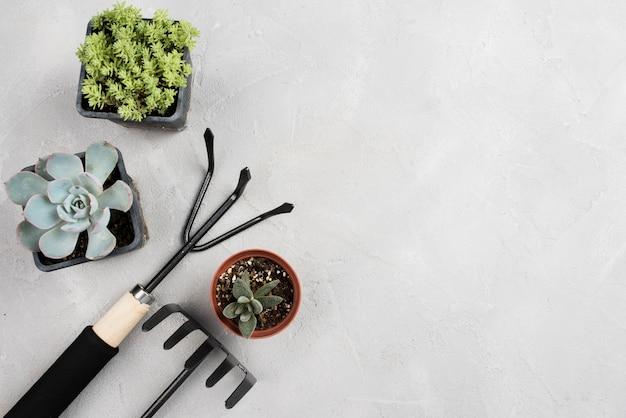 Vasos de plantas e ferramentas de jardinagem na mesa branca