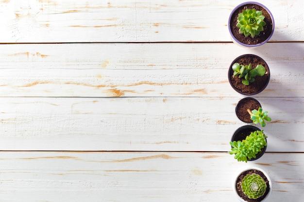 Vasos de plantas em fundo branco de madeira