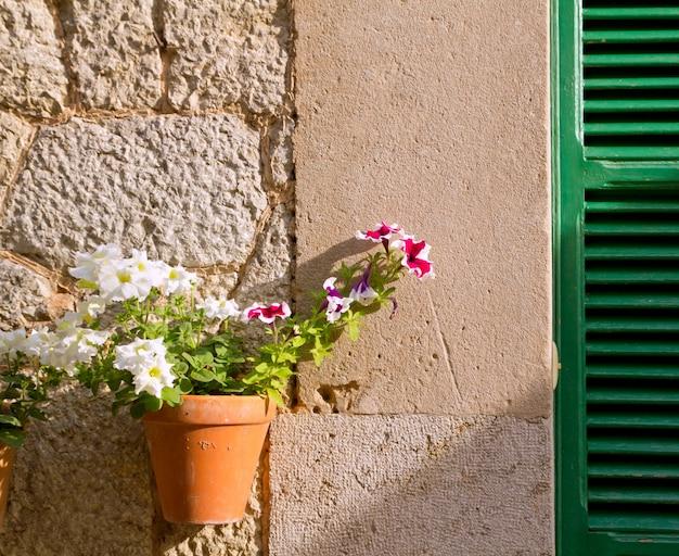 Vasos de plantas em valldemossa em maiorca baleares