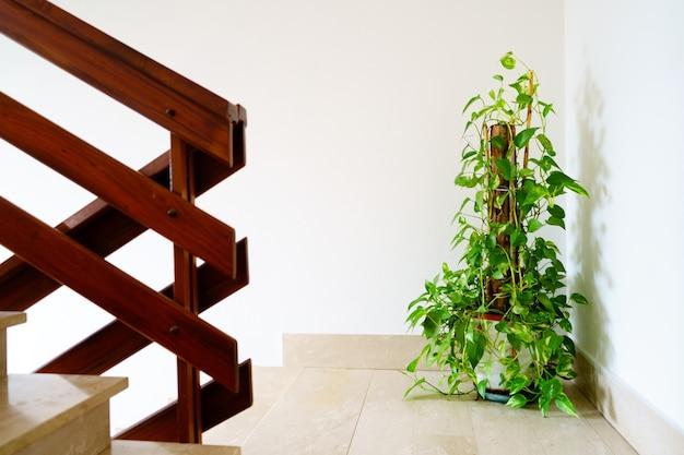 Vasos de plantas no interior da escada da sala