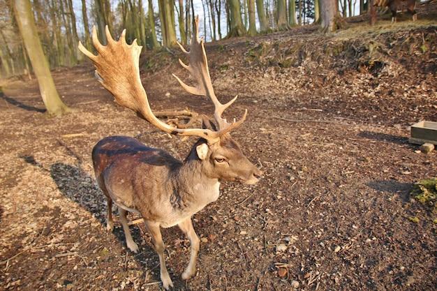 Veado em pé na floresta