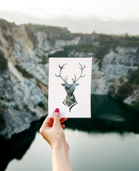 Veado, quadro, natureza, liberdade, lugar
