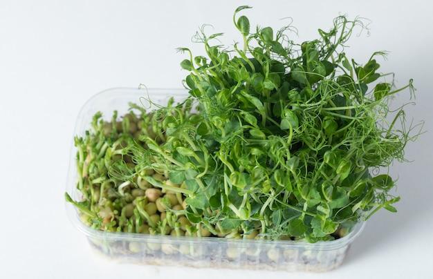 Veganismo. alimentação saudável. microgreen ervilhas em uma bandeja de plástico em um branco.