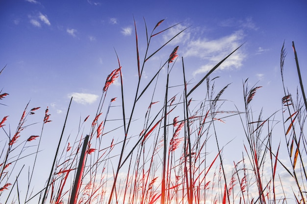 Vegetação alta perto de um pântano com um céu azul