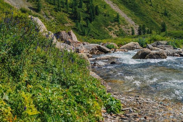 Vegetação bonita perto do riacho da montanha na luz solar. pedregulhos grandes em close-up de fluxo de água rápido. corredeiras do rio em dia de sol. fluxo rápido perto de pedras molhadas. rica flora das terras altas.