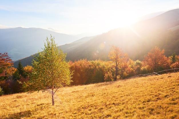 Vegetação das terras altas, verão modesto e cores invulgarmente bonitas florescem no outono