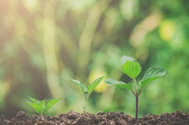 Vegetação de plantas jovens e mudas estão crescendo no solo com a luz da manhã.