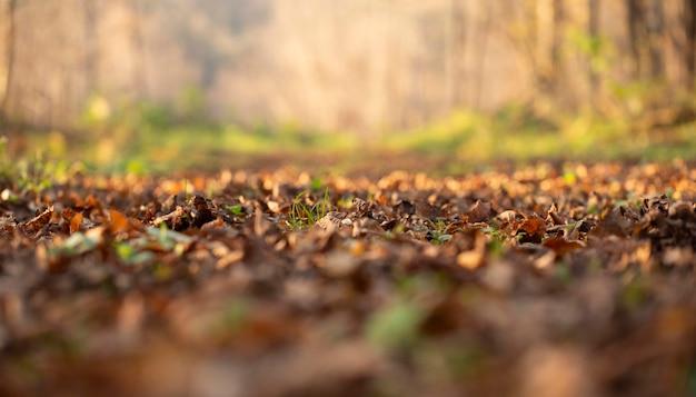 Vegetação de plantas naturais no parque