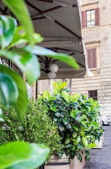 Vegetação nas ruas de pedra da cidade