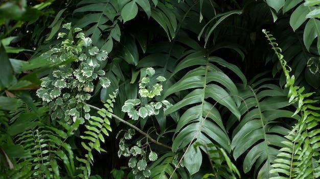 Vegetação tropical exótica suculenta brilhante na selva. fundo orgânico natural de foco seletivo