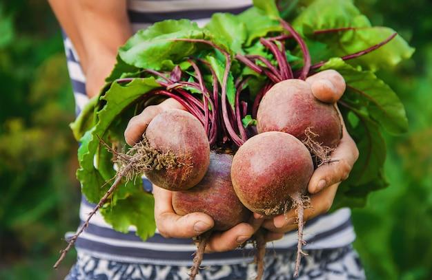 Vegetais caseiros orgânicos nas mãos dos homens.