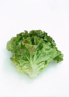 Vegetais de repolho fresco orgânico na água