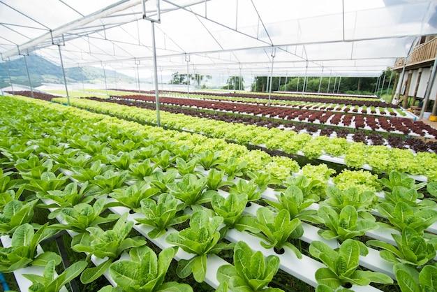 Vegetais hidropônicos que crescem em estufa, vegetais não tóxicos
