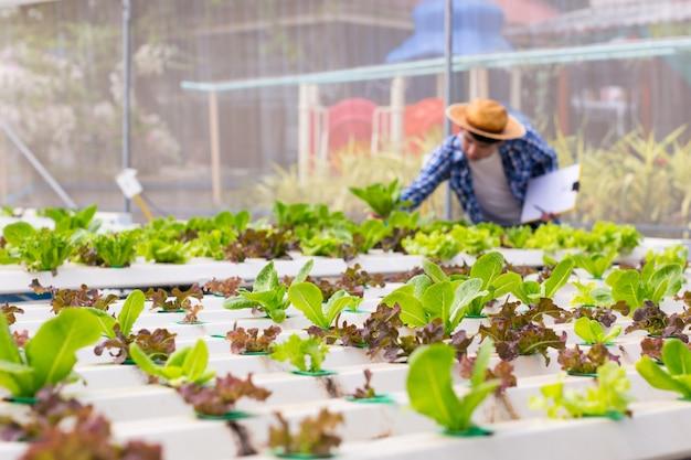 Vegetais orgânicos são cultivados em fazendas cultivadas por agricultores. agricultor orgânico monitorando seus orgânicos para desenvolver vegetais cultivados orgânicos